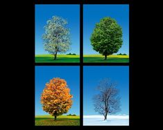 4 Seasons - Trees - Studio Macbeth