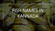 Fishes of Karnataka - Fish names in English -Kannada and Tulu with pictures, Freshwater Fishes of Karnataka, Marine fishes Saltwater Fish names in Tulu ಕನ್ನಡ, udupi Grass Carp, Fish List, Parrot Fish, Eagle Ray, Yellowfin Tuna, In Kannada, Cooking Fish, How To Cook Fish, Marine Fish