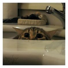 There's just something about a kitty in the sink...