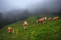 Pastoral by elenasolovieva #animals #animal #pet #pets #animales #animallovers #photooftheday #amazing #picoftheday