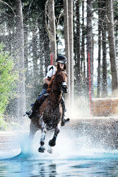 Eventing horse and rider.