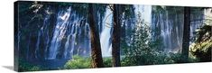 Premium Thick-Wrap Canvas Wall Art Print entitled Waterfall in a forest, McArthur Burney Falls Memorial State Park, California,, None