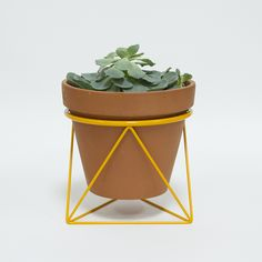 Want want want want. // Octahedron Ring Planter, Eric Trine, $55