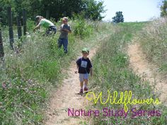 Nature Study: A wildflower walk focusing on monocots and dicots