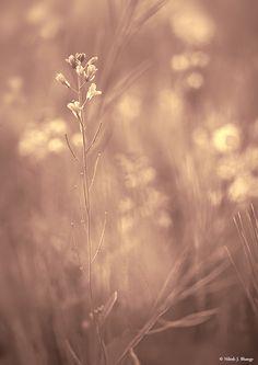 Delicate flowers - Nilesh Bhange