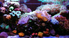 Randall Douglas' (rhdoug) 58 US-gallon 'Studio Reef' Aquarium    Reefcentral