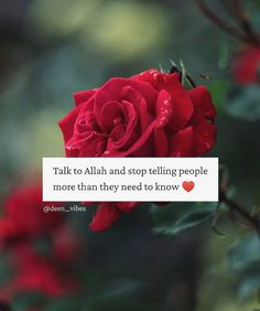 Quotes For Dp, Quran Quotes Love, Good Thoughts Quotes, Quotes Deep Feelings, Faith Quotes, Allah Quotes, Best Islamic Quotes, Islamic Phrases, Muslim Quotes