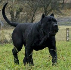 How would you name this beautiful dog