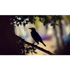 "87 Likes, 4 Comments - Carlos Rodríguez 📷 (@carlosrb_photo) on Instagram: ""Fotografía espontánea. . . . . . . . . . . #cinematography #createexplore #photography #gramslayers…"""
