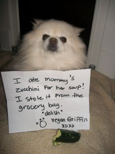 """I ate Mommy's zucchini for her soup! I stole it from the grocery bag. ""Delish"" -Vegan Griffon xoxo"" ~ Dog Shaming shame - I'll help myself."