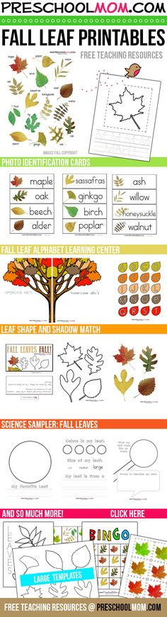 Tons of free Fall Leaf Printables!  Photo Cards, Sequencing, Alphabet, Science Sampler, Handwriting, Art Templates, Bingo and more.