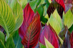 COLD HARDY EXOTIC PLANTS FOR THAT TROPICAL GARDEN EFFECT |The Garden of Eaden