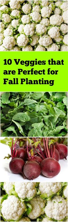 10 vegetables to plant this fall!