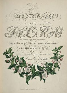 Floral Calligraphy I Eliza Eve Gleadall I The Beauties of Flora with Botanic and Poetic Illustrations I 1834 Calligraphy Letters, Modern Calligraphy, Flourish Calligraphy, Botanical Illustration, Botanical Prints, Botanical Drawings, Book Illustration, Vintage Magazine, Beautiful Lettering