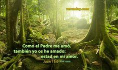 """La última noche de su vida humana, Jesús les dijo a sus apóstoles: """"El que tiene mis mandamientos, y los guarda, ése es el que me ama; y el que me ama, será amado por mi Padre"""" (Juan 14:21). """"permaneced en mi amor"""", los instó (Juan 15:9). Referente a la lucha contra el mundo que nos rodea, reparemos en la oración final que hizo Jesús (Juan 17:15,16). El Padre Jehová vigila a quienes ama y los fortalece porque se mantienen separados del mundo."""
