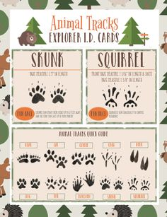 These free printable animal tracks flashcards are perfect for identifying animal footprints! Print them, laminate them, and then take them on a hike! Preschool Science, Science Activities, Nature Activities, Science Centers, Science Fun, Science Education, Animal Science, Physical Science, Early Education