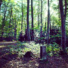 【kiki_pinakothek】さんのInstagramをピンしています。 《#baselland #switzerland #ausflug #hiking #wald #forest #森 #スイス #ハイキング》