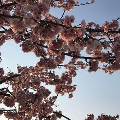 Teruyuki Fujiiさん(@teruyuki_fujii)のInstagramアカウント: 「満開までもう少しかなぁ〜🙄 #今日の平和 #PeaceForToday #today #peace #sky #osaka #japan #今日 #平和 #空 #大阪 #日本 #感謝…」