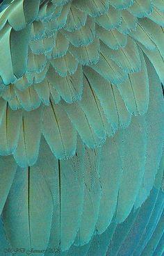 Macaw Feathers macro