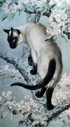 C.F. Tunnicliffe (1901-1979) {I like the Oriental feel of this piece... Siamese or Burmese. cat climbing what looks like a cherry blossom tree. ~ Belle} #SiameseCat