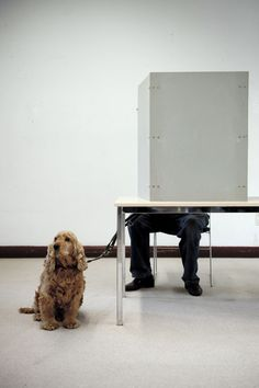 Photo of the day: A dog waits while its owner votes for regional elections of North Rhine-Westphalia in Duesseldorf, western Germany. (AFP/Getty Images)
