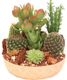 Rather than buying a cactus garden, you can easily create your own with little investment.