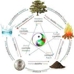 Los Órganos y sus esferas funcionales – como trabajarlos mediante Qi Gong – La flor del Cirerer – Acupuntura Mataró