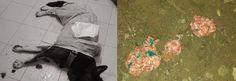 Teneri cuccioli Notizie: Polpette avvelenate a Koba, salvato in extremis la...