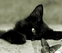 22 Scarily Cute Black Cats That Will Put A Spell On You | Petslady.com