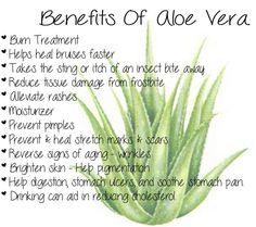 The Benefits of Aloe Vera!