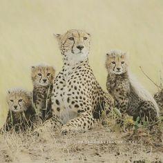 Family Gepard