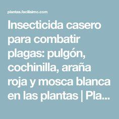 Insecticida casero para combatir plagas: pulgón, cochinilla, araña roja y mosca blanca en las plantas | Plantas