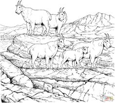 Mountain goat herd coloring page from Mountain Goat category. Select from 24948 printable crafts of cartoons, nature, animals, Bible and many more.