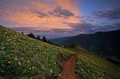 "Dog Mountain, Washington--looking down the ""aaaaaaas yyyyyyooooouuuuuuuuuu wwwwwwwwiiiiiiishhhhhhhhh"" hill :)"