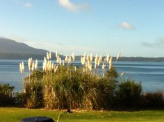 A Solitaire morning!  Our staff retreat at Solitaire Lodge, Rotorua