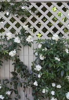 43 Awesome Small Garden Fence Ideas – ZYHOMY #garden #gardenideas Small Garden Fence, Garden Edging, Garden Art, Garden Ideas, Fence Ideas, Unique Gardens, Amazing Gardens, Gingham Tablecloth, London Fields