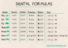 Dental Formulas in Animals - I Love Veterinary Veterinarian School, Veterinarian Technician, Veterinarian Quotes, Vet Tech Student, Vet Assistant, Medicine Student, Animal Medicine, Vet Med, Vet Clinics