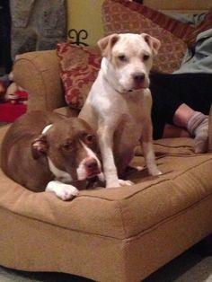 Bella and Bruno posing