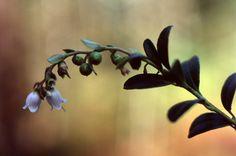 2012 syyskuun puoliväli Praktica & Pancolar 063 Flowers, Plants, Plant, Royal Icing Flowers, Flower, Florals, Floral, Planets, Blossoms