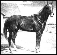 Traveler Was Apparently Born In 1885. He Is A Foundation Sire For The Quarter Horse Industry But Little Else Is Known About His Beginnings Including His Sire And Dam.