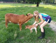Offering top-quality Registered Foundation Pure Miniature Zebu and Miniature Texas Longhorn cattle for sale at all times. Farm Animals, Animals And Pets, Cute Animals, Minature Cows, Zebu Cattle, Cattle Dogs, Mini Cows, Mini Farm, Cattle Farming