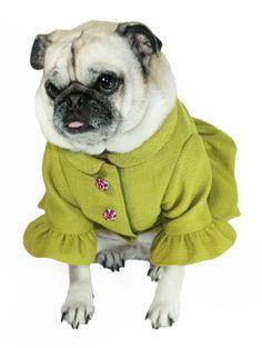 Ruffle Dog Coat.....................available at http://doggyinwonderland.com/item_1979/Ruffle-Dog-Coat.htm