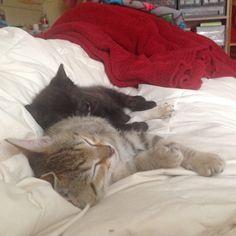 Two very sleepy kittens