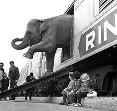 A Ringling Brothers Circus elephant exits a train car. foto's, Humans have always been so weird Black White Photos, Black And White Photography, Old Pictures, Old Photos, Ringling Brothers Circus, Foto Picture, Rare Historical Photos, Elephant Walk, Wild Elephant
