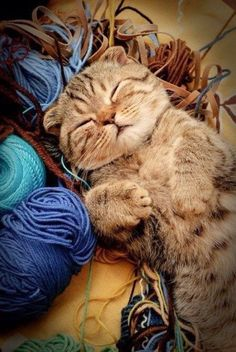 Knitting Assistant calls it a day - My cat likes to be on my lap when I knit with the yarn around his paws. H