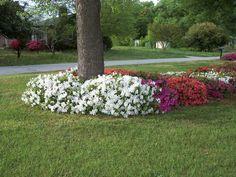 Ideas For Landscaping Around Trees Fleagor Patio Images . Landscaping Around House, Home Landscaping, Landscaping With Rocks, Front Yard Landscaping, Landscaping Software, Rustic Landscaping, Landscaping Design, Wonderful Flowers, Plantar