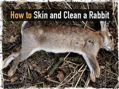 How to Skin and Clean a Rabbit; make sure they are very dead. These things cry like a human baby... it's freaky