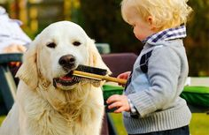 #goodmorning #pet #love #lovely #dog #baby #goodnight #cute #sleep #bed #adorable #play #cry #smile #rio #grass #kiss #kids #sweet #summer