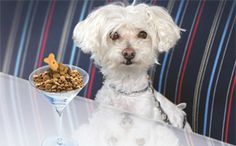 Palm Springs Dog Friendly Yappy Hour Spots Lol Dog Friends Pet Dogs Dogs Day Out
