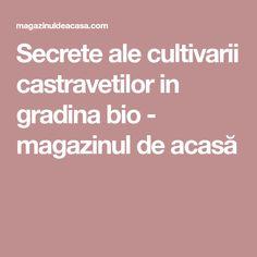 Secrete ale cultivarii castravetilor in gradina bio - magazinul de acasă Ale, Ale Beer, Ales, Beer